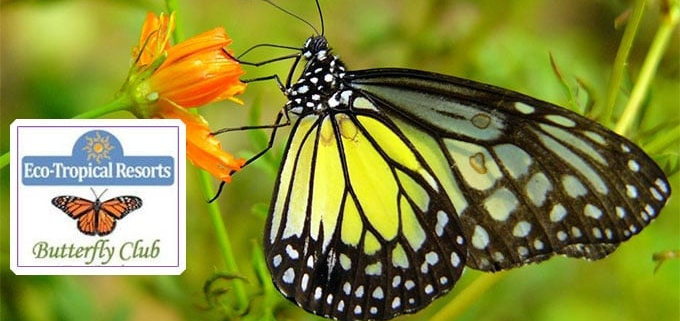 The Butterfly Club: a group of tropical resorts who have successfully completed the eco rating exam