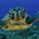 Clean up ocean efforts to preserve the ocean wildlife such as the sea turtles