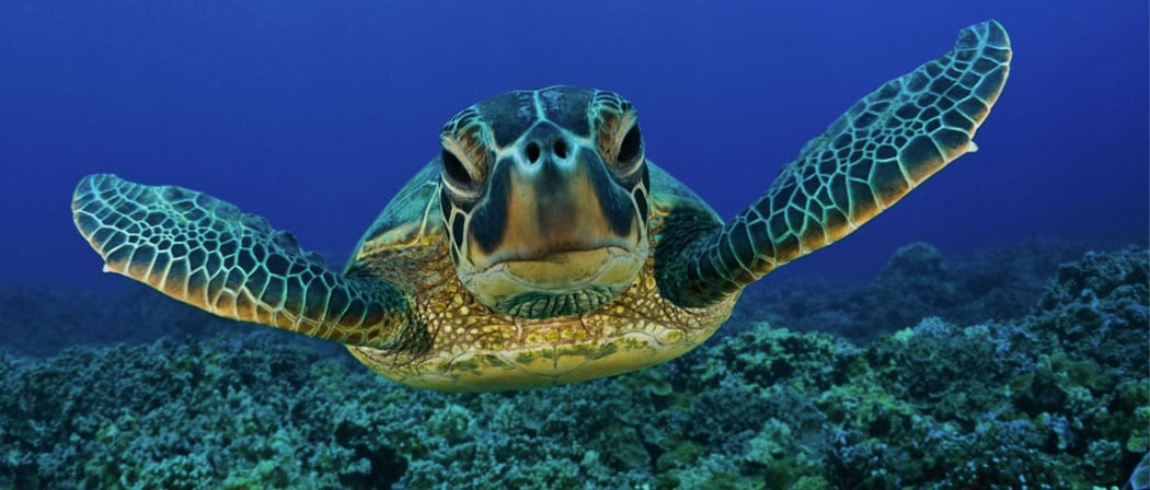 Clean up ocean efforts to preserve the ocean wildlife such as the sea turtles
