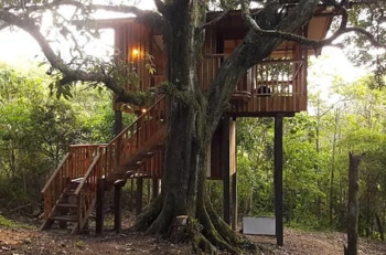 Mount Totumas Cloud Forest Preserve Howler Tree Cabin