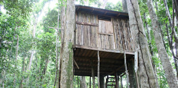 Rosalie Forest Eco Lodge Bamboo Tree House