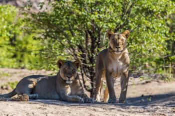 Namibia Eco Lodges-Tours at Okonjima