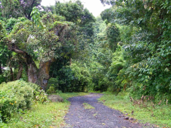 Calabash Mountain Villa - Saint Lucia