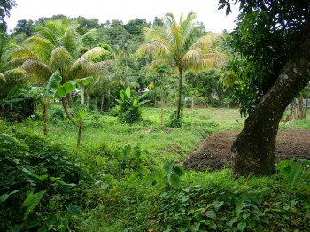 Saint Lucia Eco Lodges