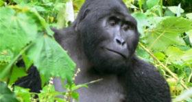 Green World Safaris