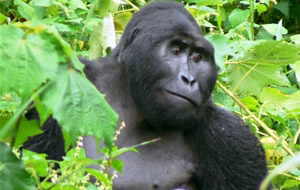 Green World Safaris-Uganda