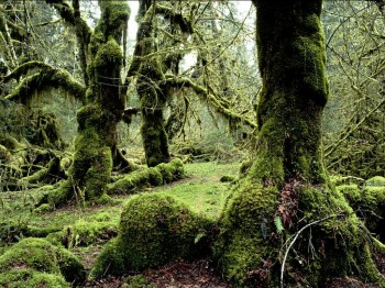 Guatemala Eco Lodges and Ecotourism