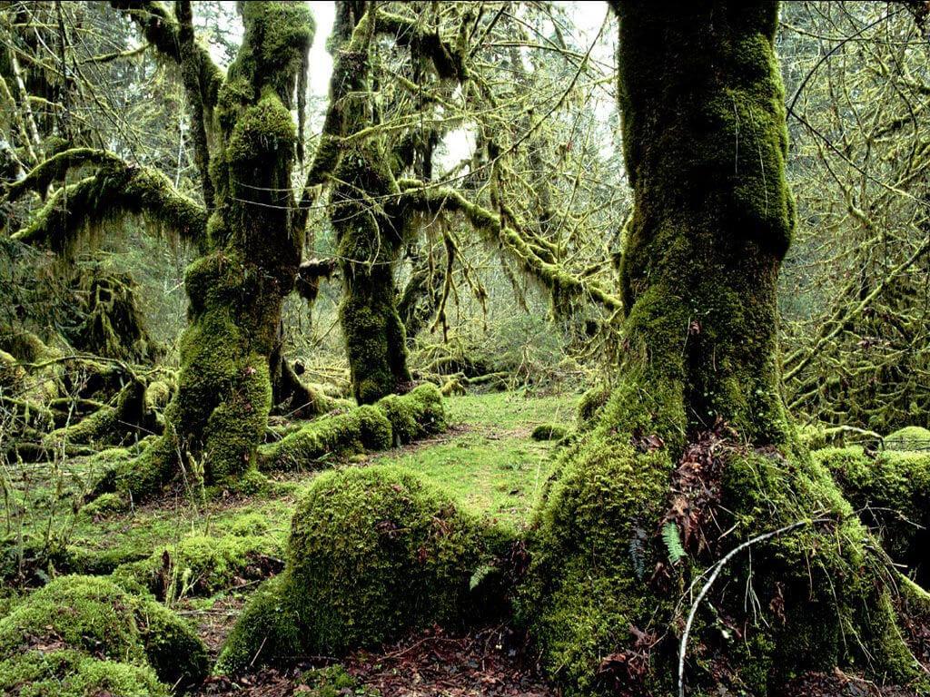 Guatemala Eco Lodges vegetation