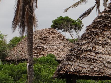 Tembo Kijani in Tanzania