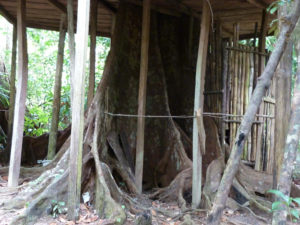 Rosalie forest Eco Lodge-Dominica