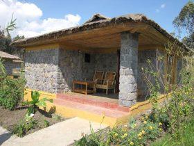 African Jungle Adventures in Rwanda and Uganda