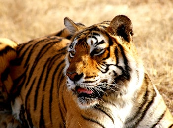 India Eco Lodges and Tours