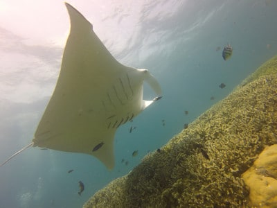 Micronesia Eco Lodges Great scuba diving