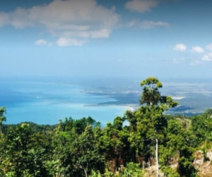 Mel's Botanical Retreat-Jamaica